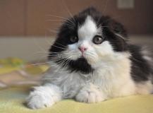 Houston Ostrov Cat
